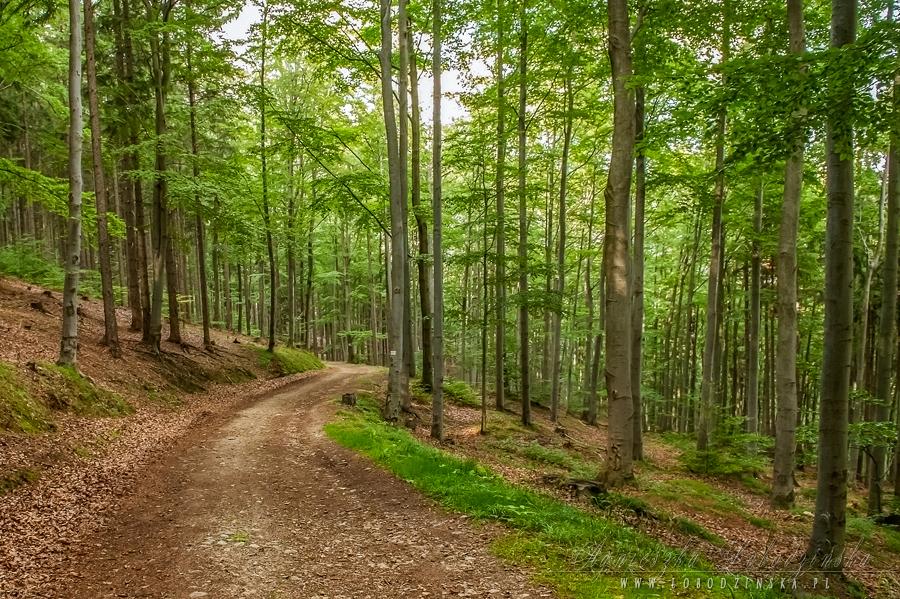 Lasy-Złoty Stok