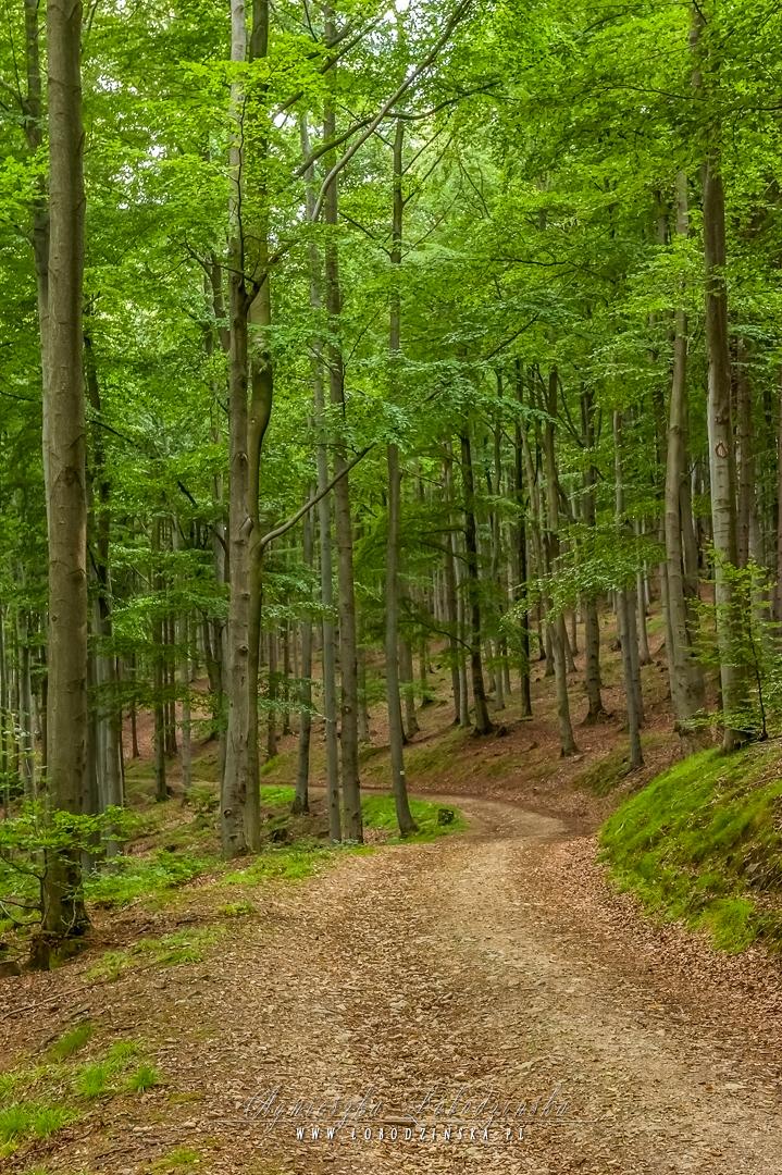 Lasy Złoty Stok