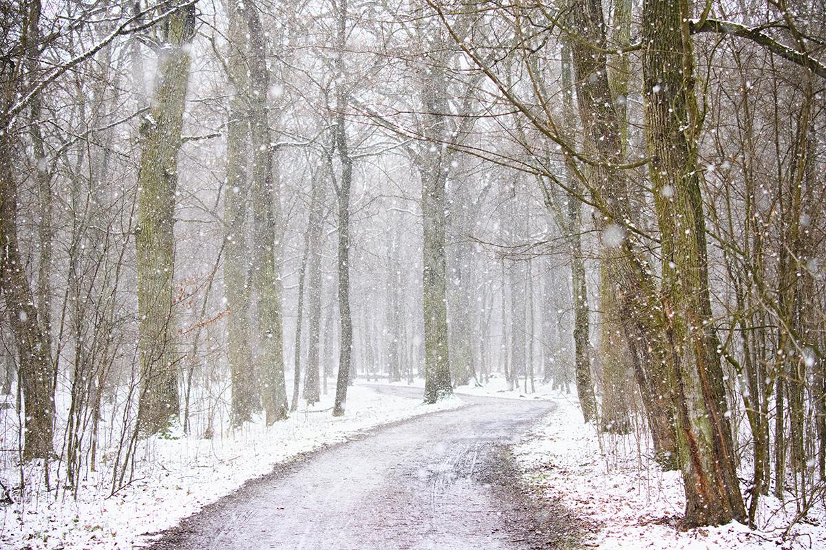 Las Rędziński - Wrocław 2021