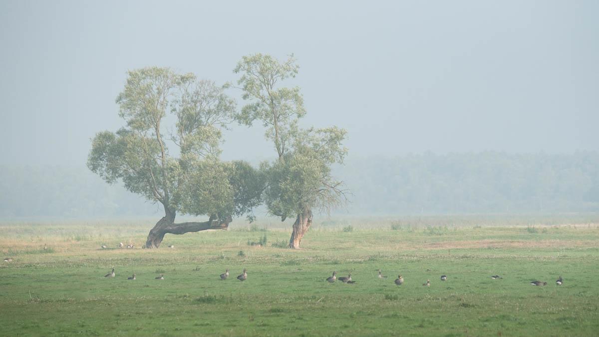 Park Krajobrazowy Ujście Warty